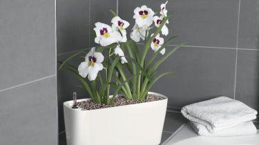 Pflanzen für badezimmer  Pflanzen für das Badezimmer - bauemotion.de