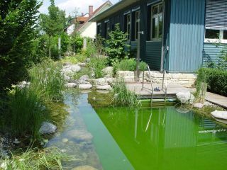 Ein Gartenteich Als Heimische Oase Bauemotion De