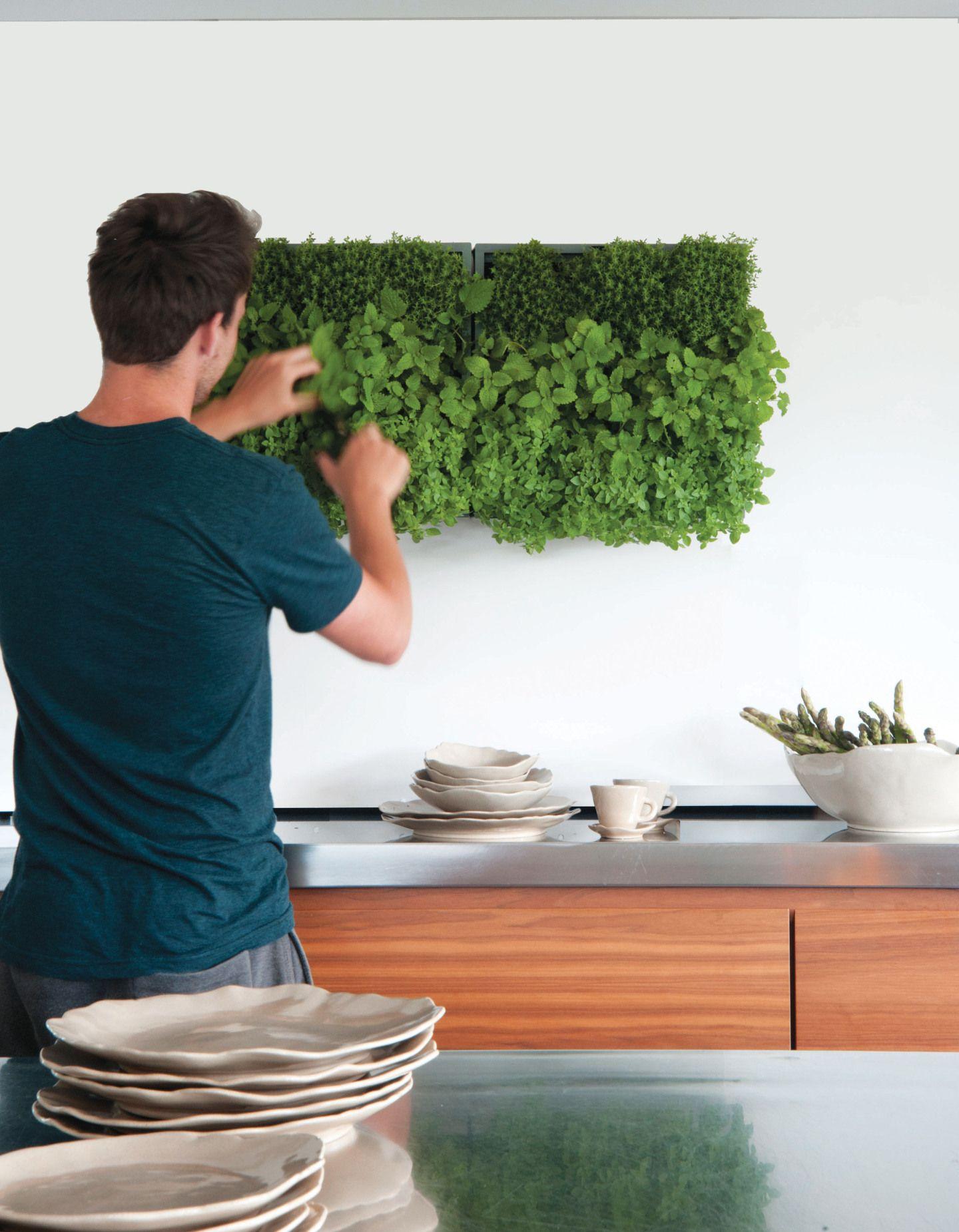 vertikaler kr utergarten von karoo. Black Bedroom Furniture Sets. Home Design Ideas